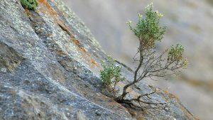 幼芽從岩石縫隙中長出來