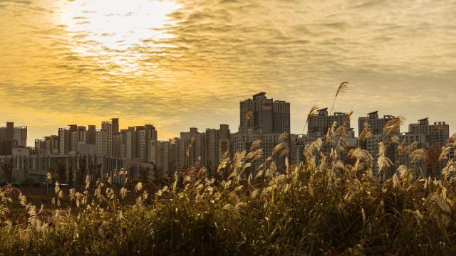 韓國首爾(網絡圖片)