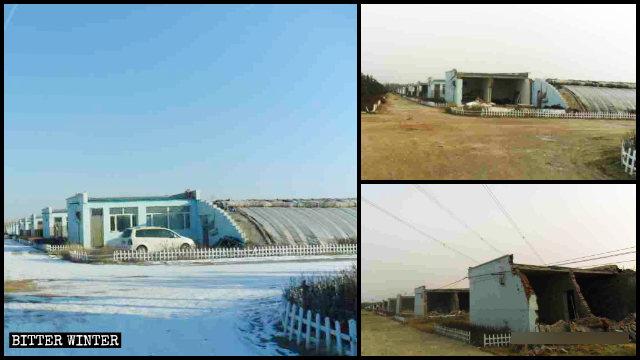 呼和浩特市賽罕區金河鎮大棚看護房被拆遷前後對比圖