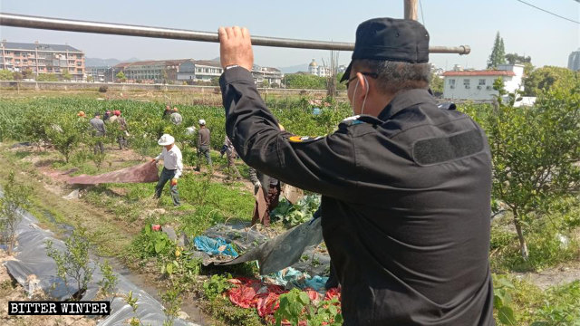 蒼南縣農民瓜架被毀