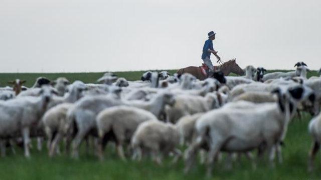 牧民在草原上騎馬放羊(網絡圖片)